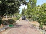 Photo of property SI1235, 18 de 21