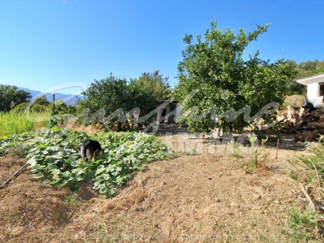 Photo of property SI1353, 23 de 31