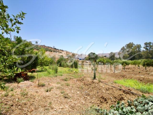 Photo of property SI1353, 18 de 31