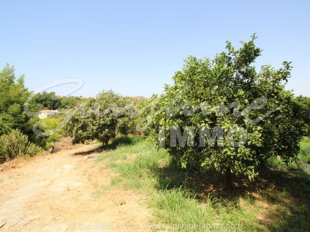 Photo of property SI1358, 20 de 21