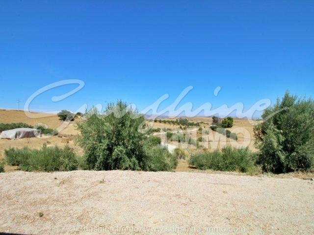 Photo of property SI1365, 10 de 25