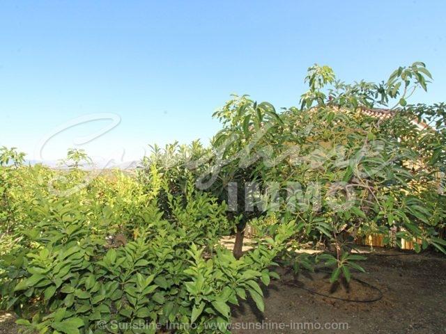 Photo of property SI1544, 3 de 38